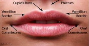 Close Up of Mouth Depicting Names of Areas Around Lips
